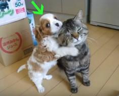 perrito y gatito - portada
