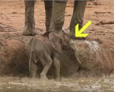 elefantito en charco - portada