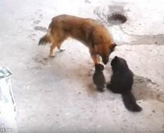 gata y perro - portada