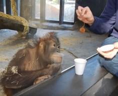 orangutan y magia - portada