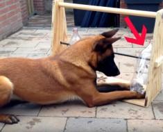 entrenar perro - portada