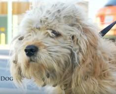 perro y pelaje - portada