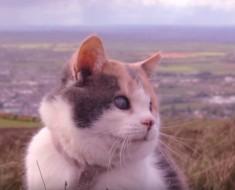 enseñanza de gato - portada
