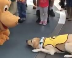 perro y pluto - portada