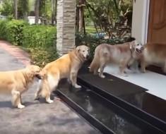perros educados - portada