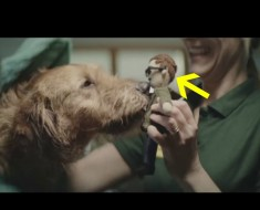 perro y muñeco - portada