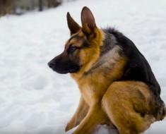 perro jorobado - portada