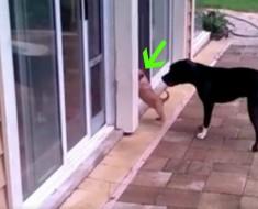 perro y puerta - portada