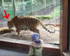 tigre despierta a otro - portada