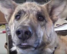 perro habla con amo - portada