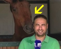 periodista y caballo - portada
