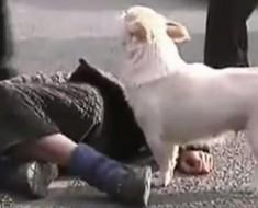 perro y desmayado - portada