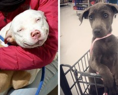 perros pirmer dia adopcion - portada