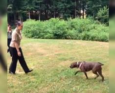 soldado ve a perro - portada