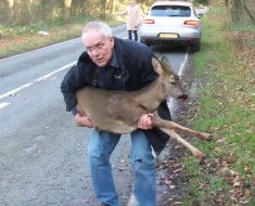 ciervo herido - portada