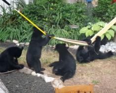 osos-jugando-portada