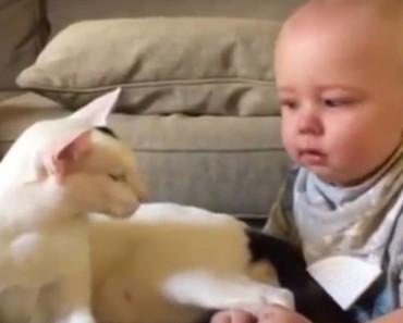 gato-conoce-a-bebe-portada