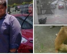 atropella-perro-portada