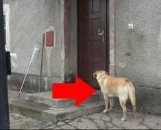 perro-toca-timbre-portada