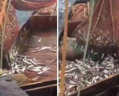 pesca-inusual-portada