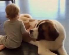 amistad-con-perro-portada