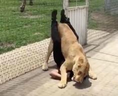 leon y entrenador - portada