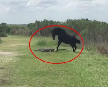 cocdrilo caballo portada