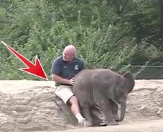 elefante cachorro portada