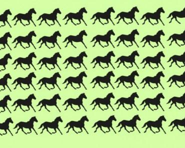 caballo - portada