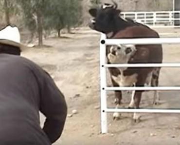 reunion vaca portada
